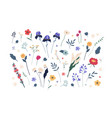botanical collection various blooming flowers vector image