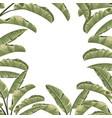 frame tropical botanical foliage plants green vector image