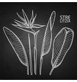 graphic strelitzia collection vector image