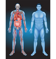 Human anatomy with different organs vector image vector image