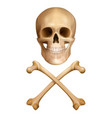 human skull with crossed bones vector image