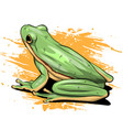 a cartoon green frog drawing vector image