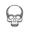 human skull isolated on black color object vector image vector image