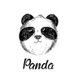 panda hand drawn sketch vector image