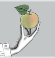 womans hand with an apple vector image vector image