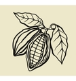black cacao beans vector image vector image