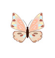 butterfly on a white background vector image vector image