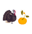 farm hen turkey and ripe orange pumpkin vector image vector image