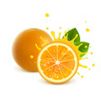 juicy whole orange and half orange vector image