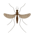 Nature mosquitoes stilt disease transmitter vector image