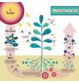 photosynthesis process diagram vector image vector image
