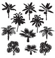 tropical plants silhouette set vector image vector image