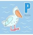 Alphabet letter P pelican children vector image vector image