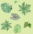 botanical background of green leaves tropical vector image vector image