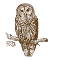 engraving owl vector image vector image