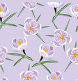pattern with spring purple crocus vector image vector image