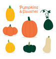 pumpkin and squashes set collection vector image vector image