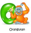Cartoon of O Letter for Orangutan vector image vector image