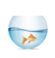 goldfish floats in a aquarium vector image