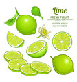 lime fruits set vector image vector image