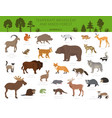 temperate broadleaf forest and mixed forest biome vector image vector image