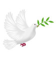 white pigeon flying with leaf concept peace vector image