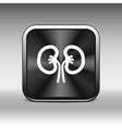 kidney icon isolated human two vein white medical vector image vector image
