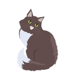 Siberian Cat Flat Design vector image