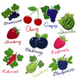 summer juicy ripe berries vector image vector image