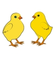 Two small chicken vector image vector image