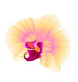 yellow orchid phalaenopsis beautiful flower vector image vector image