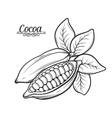 Hand drawn cocoa bean vector image