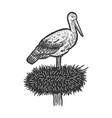 stork in nest sketch vector image vector image