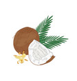 elegant natural drawing cracked coconut palm vector image