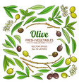olive elements set vector image vector image