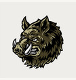 colorful vintage cruel wild boar head vector image vector image