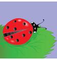 ladybird vector image