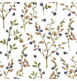 watercolor blueberry pattern vector image vector image