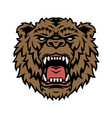 wild angry bear head concept vector image vector image