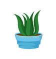 succulent aloe vera in a pot home plant in a vector image