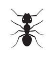 black ant insect silhouette vector image