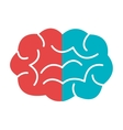 red and blue brain graphic vector image