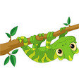 chameleon on branch vector image vector image