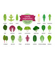 green vegetables leaf set vector image vector image