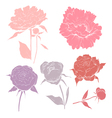 Hand drawn peony flowers set vector image vector image