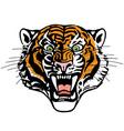 head roaring tiger vector image vector image