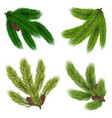 green branches of coniferous trees collection vector image