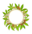 anise branches frame vector image