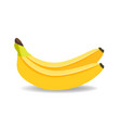 banana isolated on white banana background vector image
