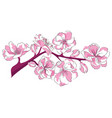 cartoon branch cherry blossoms of vector image